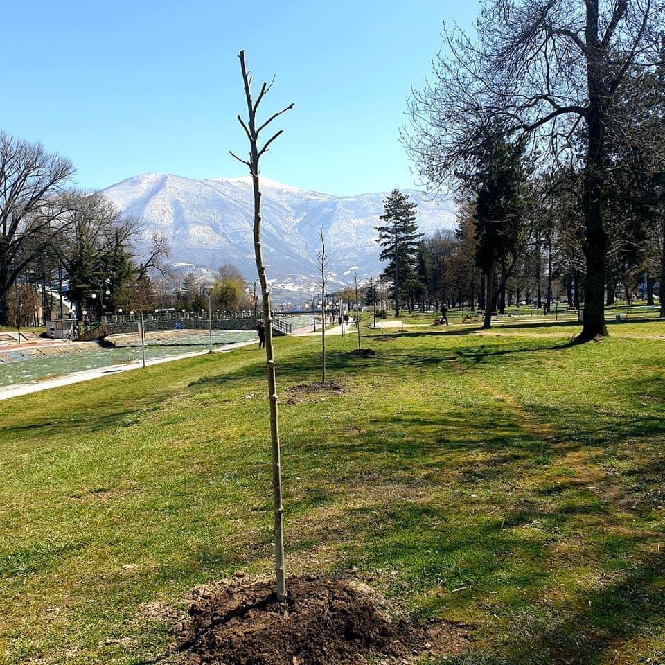 Mbjellje e fidanve të rinjë në parkun e qytetit në Gostivar